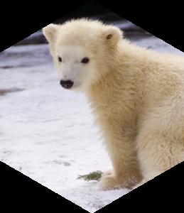 Jääkaru Nora